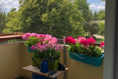 Blick-vom-Balkon