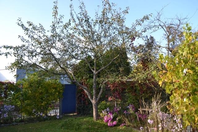 Garten mit Ausgang